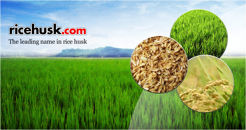 Ground Rice Husk For Biomass Briquette Use And Bedding